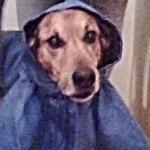 il cane edgardo e la pioggia