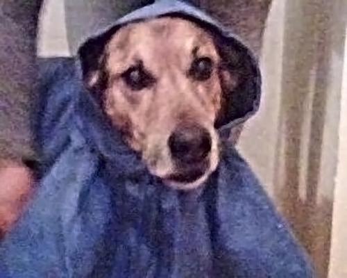 Edgardo pronto per affrontare la pioggia