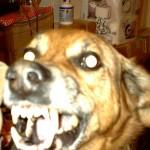 Il mio cane sembra feroce......ma non lo è affatto !!!