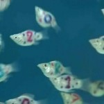 pesci tatuati