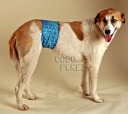 scegli l'autorizzazione moda firmata rivenditore online Sexy biancheria per cani   Il Cofanetto Magico