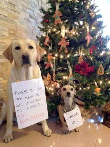 Immagini Natalizie Con Cani.Natale Consigli Utili Per Evitare Stress A Noi E Ai Nostri