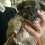 il piccolo cucciolo