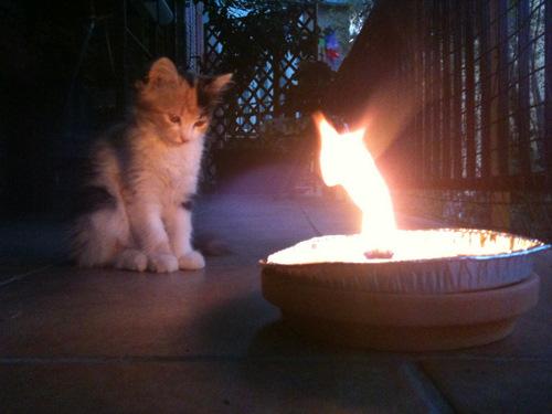 rubens-fiamma gatto