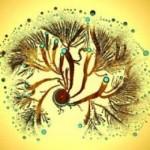 Il batterio Paenibacillus vortex