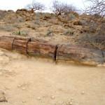 Tronco fossilizzato
