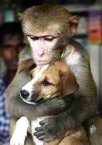 Foto della scimmia che coccola il cane