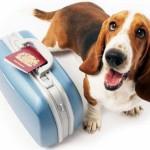 animali_cani_viaggi_aereo