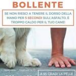 asfalto_bollente_cani