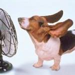 calore cani 3