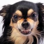 cane-aggressivo-2