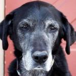 cane anziano 1