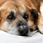 cane artrosi 1