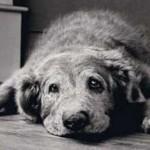 cane artrosi 2