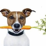 cane carota