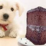 cane cioccolata 3