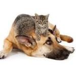 cane e gatto 2