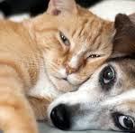 cane e gatto 3