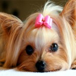 cane femmina 1
