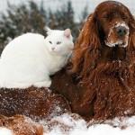 cane gatto freddo