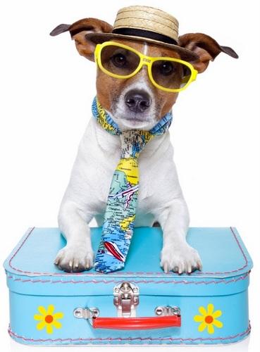 cane vacanza 2