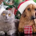 cane_gatto_natale.1