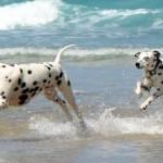cani-in-spiaggia-organizzarsi