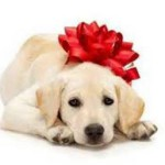 cucciolo regalo