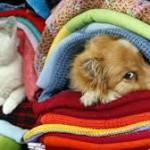 freddo cane x cof 2