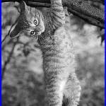 gattino sul ramo di salice