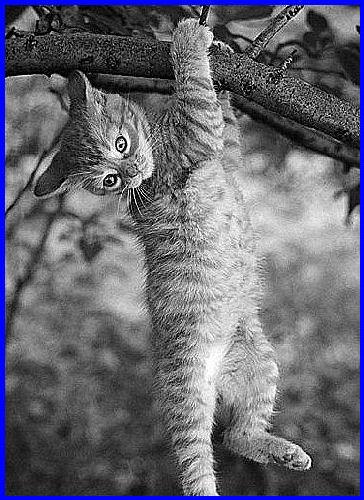 gattino-sul-ramo-di-salice