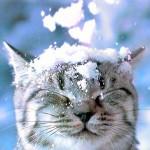 gatto-delle-nevi-usato1