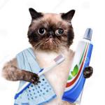 gatto-di-spazzolatura-dei-denti-40344460
