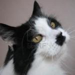 gatto pino 3 jpg