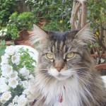 gatto x cofanetto enrica talamo