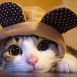 gatto yolanda
