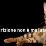 gatto1 cof