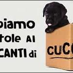 manifesto traffico cuccioli