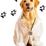 pet-therapy labrador