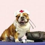 pronto-soccorso-animali
