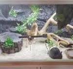 terrario per serpenti