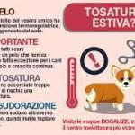 tosatura cane x cof