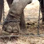 uomo elefante