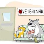 veterinario_per_gatti
