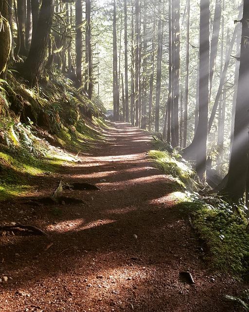 woods-2023264_640