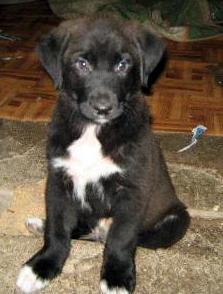 cucciolo2